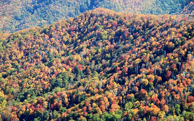 Fall Leaves In the Great Smoky Mountains