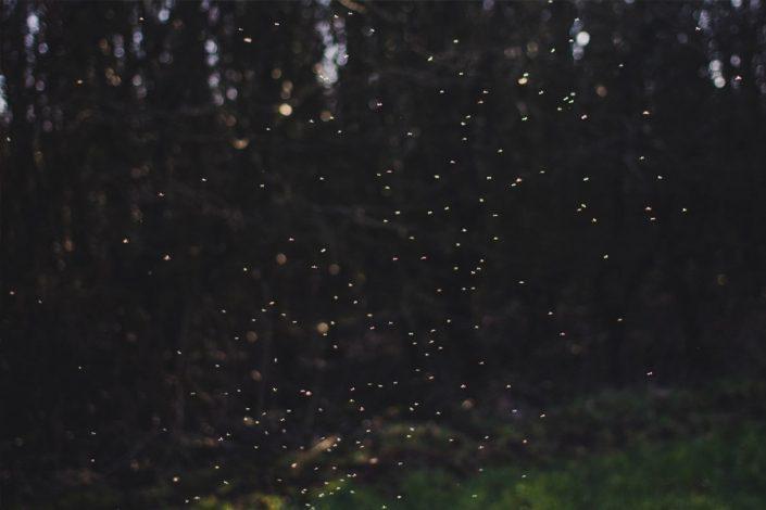 Fireflies Near Gatlinburg TN